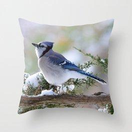 Look Skyward Blue Jay Throw Pillow