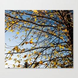 Birch Tree Photography Print Canvas Print