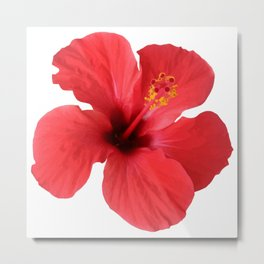 Scarlet Hibiscus Tropical Flower Vector Metal Print