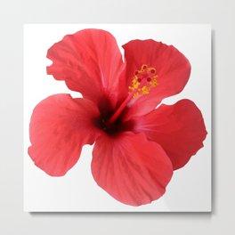 Scarlet Hibiscus Tropical Flower Vector Metal Print