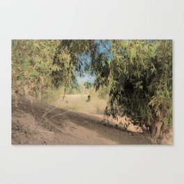 walk into trees pt2 Canvas Print