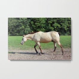 Off On A Trot Metal Print