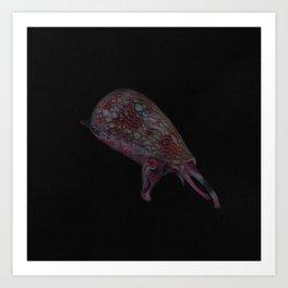 Geographer Cone Snail Art Print