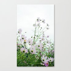 Mexican Aster 1 Canvas Print