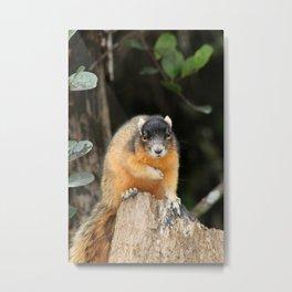Gray Squirrel On Stump Metal Print