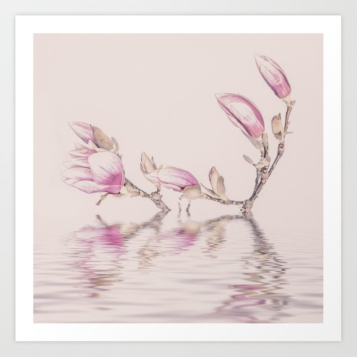 Soft pink magnolia flowers and water reflection art print by soft pink magnolia flowers and water reflection art print mightylinksfo