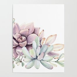 Desert Succulents on White Poster