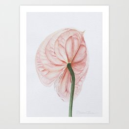 Pink Anthurium Art Print