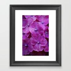 Perfectly Hot Pink Hydrangeas Framed Art Print