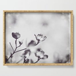 Black and White Floral Dogwood Photography, Grey Spring Flower Tree Branches, Gray Neutral Nature Serving Tray