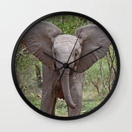 Small Elephant - Africa wildlife Wall Clock