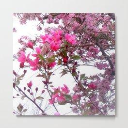FLOWERING PINK CRABAPPLE TREES SPRING FLORAL Metal Print