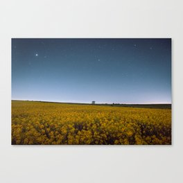 Starry Skies Over Canola Canvas Print