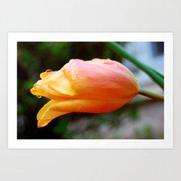 Raindrop Flower Art Print