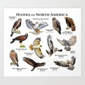 Hawks of North America by wildlife-art