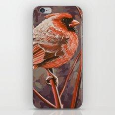 Northern Cardinal Male iPhone & iPod Skin
