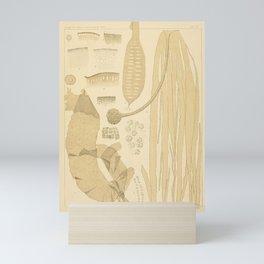 Botanical Kelp Mini Art Print