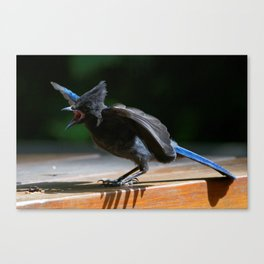 Stellers Jay | Wildife Photography | Birds | Songbird Canvas Print