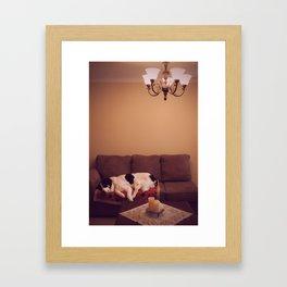 Dog in Luxury Framed Art Print