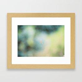 spring spider Framed Art Print