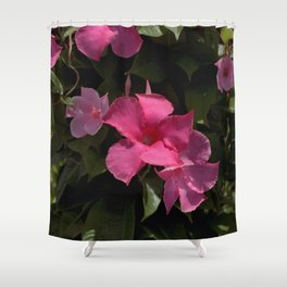 Pink Allamanda - Mandevilla splendens Shower Curtain