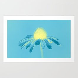 Echinacea in pastel shade Art Print
