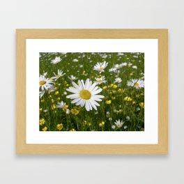 summer meadow XII Framed Art Print