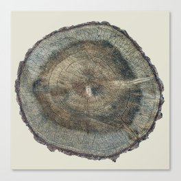 Stump Rings Canvas Print