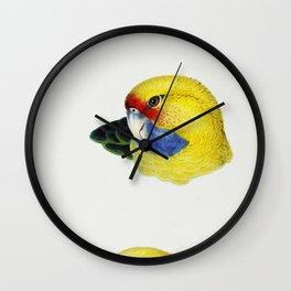 1 Yellow Rosella (Platycercus flaveolus) 2 Yellow-bellied Parrakeet (Platycercus flaviventris) 3 Pal Wall Clock