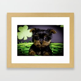 Closeup of a Tiny Yorkshire Terrier Puppy Sitting in a Green St. Patrick's Day Basket Framed Art Print