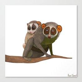 Mumma and Bubba Loris Canvas Print