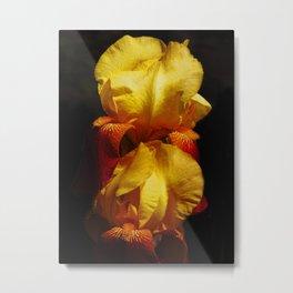 Warming Irises Metal Print