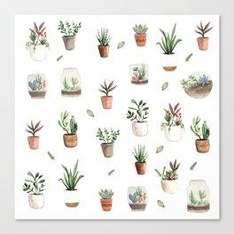 Succulent and Cacti pots and terraniums Canvas Print
