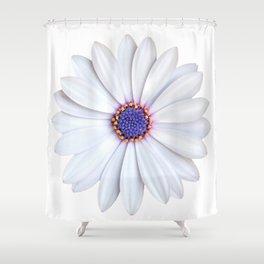 daisy daisy Shower Curtain