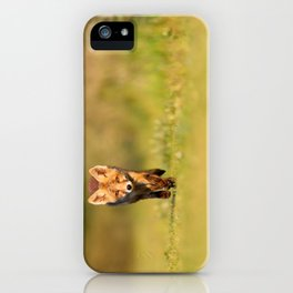 The New Kit on the Grass - Red Fox Cub iPhone Case