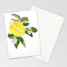 Vintage lime Fruits with Light Blue Background Stationery Cards