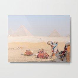 Camel at Pyramids of Giza Egypt Cairo Metal Print