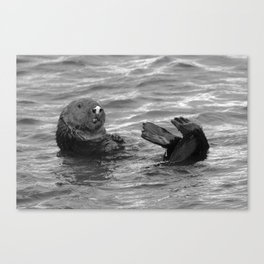otter feet Canvas Print
