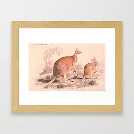 Vintage Kangaroo Family Illustration (1849) Framed Art Print