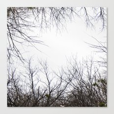 Tree Limbs Canvas Print