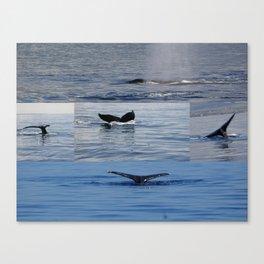 Maui whales tales Canvas Print