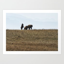 Standing Cinnamon Black Cub with mother and sibling at Pryor Mountain Art Print