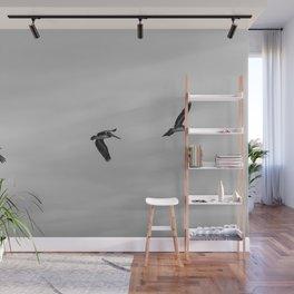 Pelican Flight Study Wall Mural