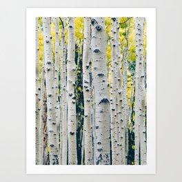 Aspen Forest Tree Bark Art Print