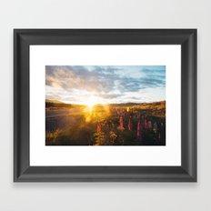 Lupine flowers  Framed Art Print