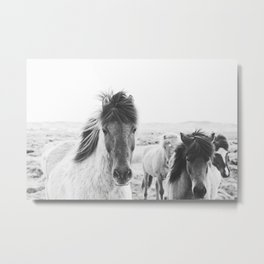 Black and White Horse Print Metal Print