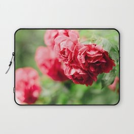 Buds of tea roses hanging in clusters on bushes Laptop Sleeve