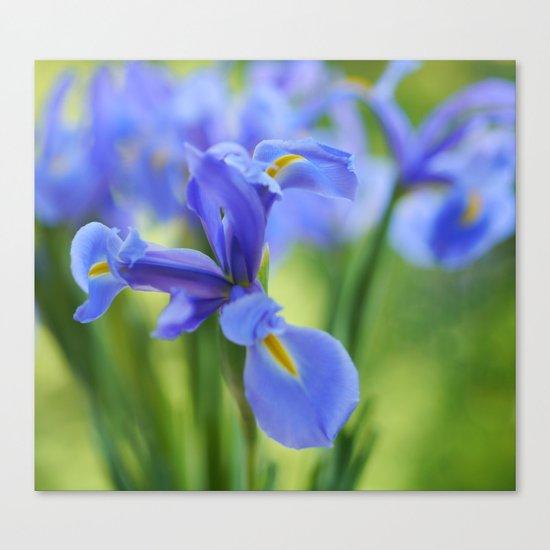 Blue Irises Canvas Print