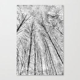 Monochrome Snow Trees Canvas Print