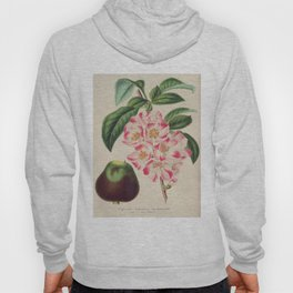 Cydonia Japonica Vintage Botanical Floral Flower Plant Scientific Hoody